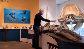 De walvissen en dolfijnen van de Westerschelde