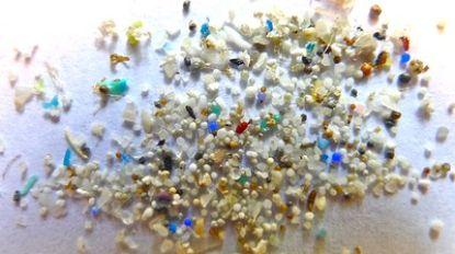 Hoogste concentratie microplastic op zeebodem tot nu toe gemeten: 1,9 miljoen plasticdeeltjes per vierkante kilometer
