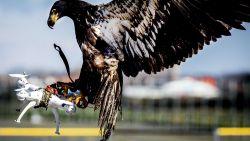 Nederlandse politie stopt met inzet roofvogels en ratten