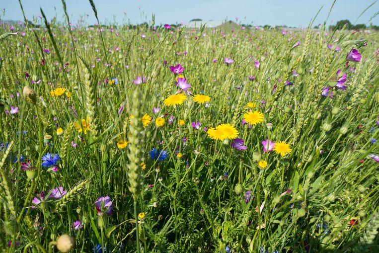 'Behoud van biodiversiteit is wat mij betreft een morele kwestie.' Beeld null