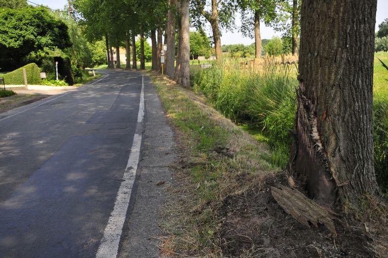 Het is al de tweede keer dat er een dode valt tegen deze boom in de Appensvoordestraat.