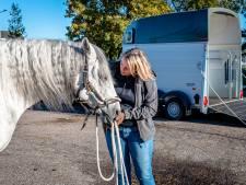 Petra helpt Fascinante zijn angsten te overwinnen: 'Zoveel paarden voelen zich onbegrepen'