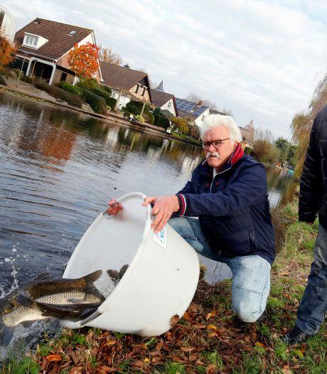 Honderden karpers gaan in Leerdam het water in: 'Sommigen zijn net grasmaaiers'