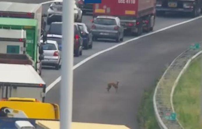 Een van de honden werd gespot door een camera van Rijkswaterstaat.