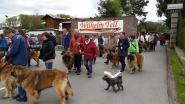 Belgische hondenclub wandelt in Limburg