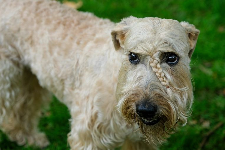 Deze hond had duidelijk een make-over gekregen voor de fotoshoot.