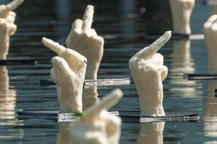 Middelvingers in de Hofvijver