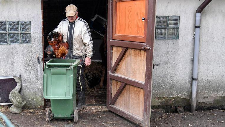 De eigenaar van de kwekerij waar de vogelgriep werd vastgesteld, gooit zijn (zieke) dieren weg.