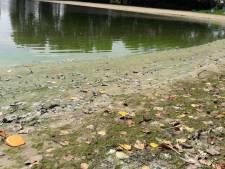 Blauwalg: zwemverbod bij camping De Schans in Alphen