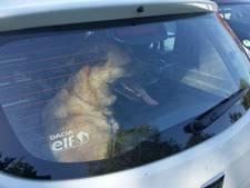 Politie bevrijdt hond uit snikhete auto in Winterswijk