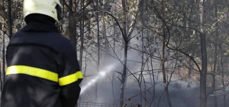 Bosbrand op de Oirschotse heide snel geblust