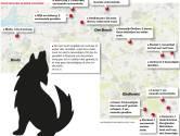 Wolf in Brabant: 'Boeren moeten maatregelen nemen'