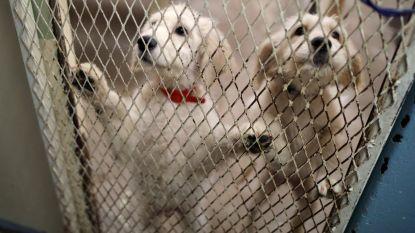 VIDEO. Politie valt binnen bij Italiaanse 'puppymaffia'