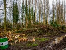 Raadsleden schrikken van bomenkap Prinsenland: Was er wel een kapvergunning?