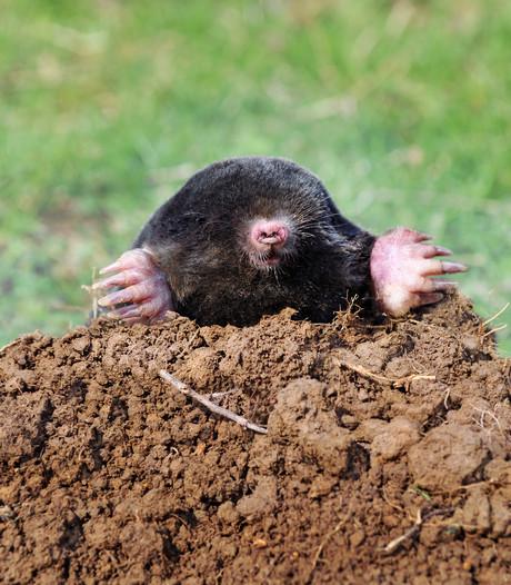 Maak kennis met het nieuwste snufje van de archeoloog: de mol