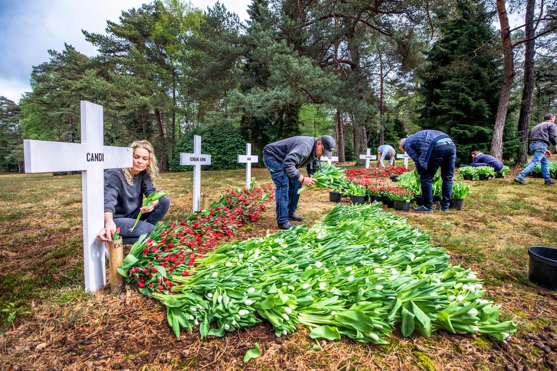 Om toch bloemen te kunnen leggen bij de oorlogsmonumenten is Tikkie samen met het Nationaal Comité 4 en 5 mei het initiatief 'Bloemen voor 4 mei' gestart. Hier bij het ereveld in Loenen. Beeld Raymond Rutting / de Volkskrant
