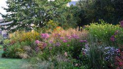 Zo leg je een prairietuin aan: weinig onderhoud nodig en ijzersterke planten