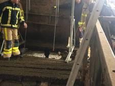 Brandweer takelt koe uit gierput in Beltrum