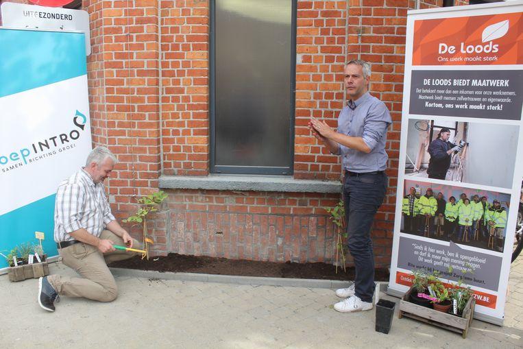 Buurtbewoner Bart De Spiegeleer en schepen De Koninck plantten de klimplant.