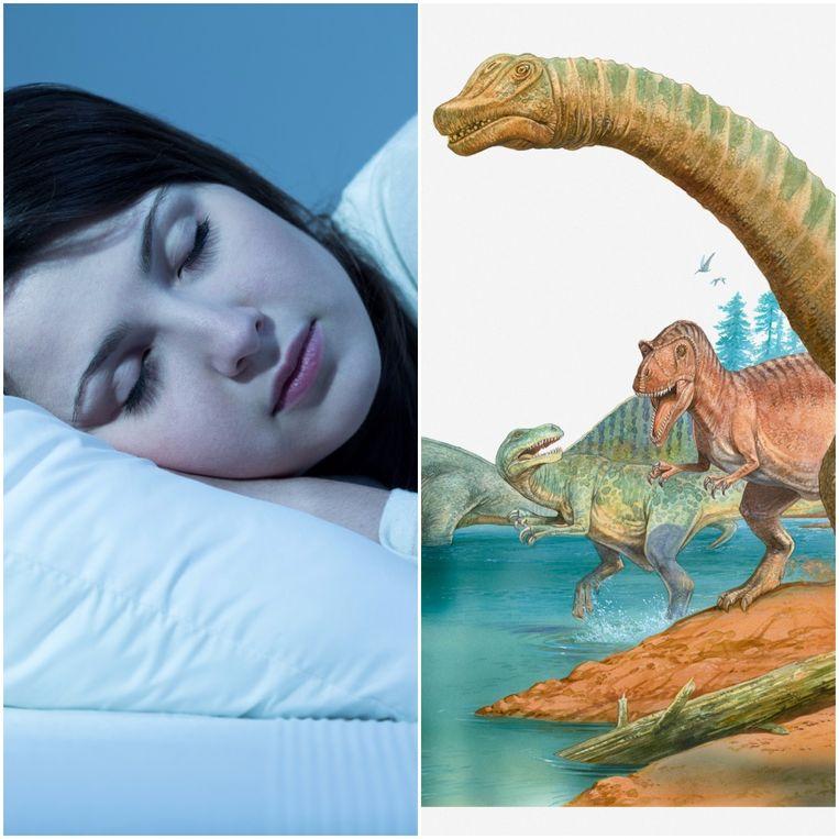 Na het uitsterven van de dinosaurussen werden zoogdieren, waaronder de voorouders van apen en mensen,  's nachts slapen.  Voordien waren ze nachtdieren omdat ze in het donker minder bedreigd werden door dino's.