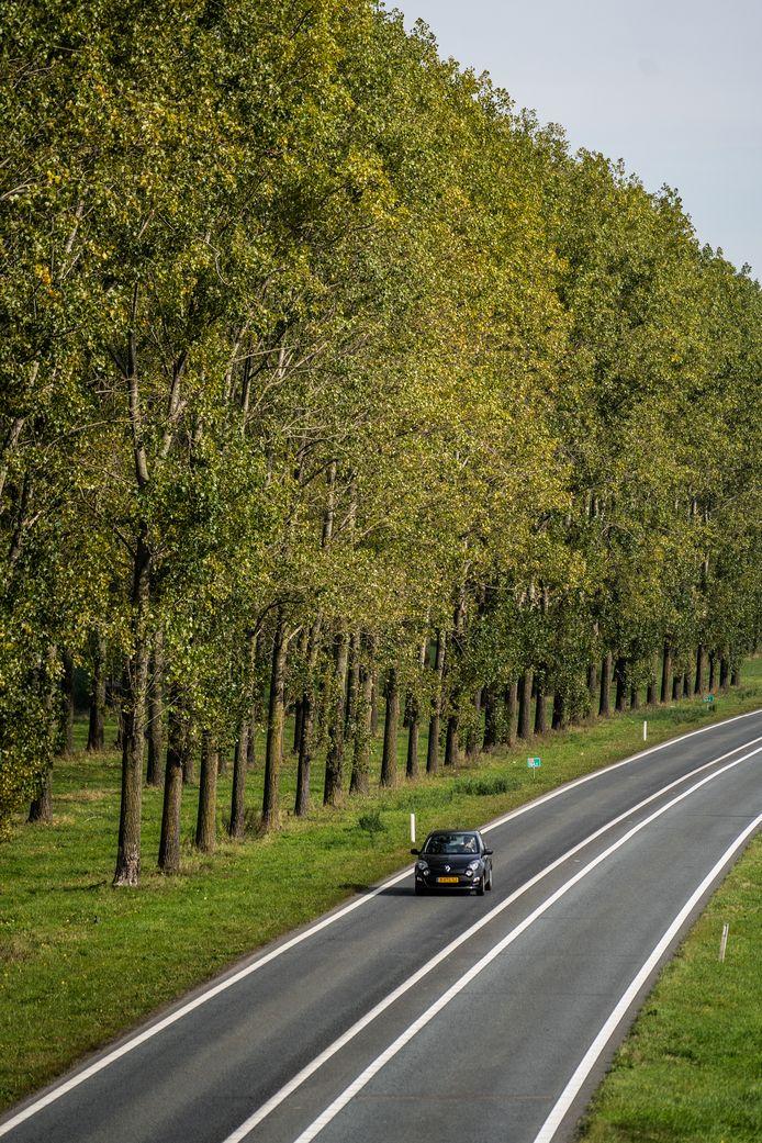 De karakteristieke bomenrij tussen Bemmel en Knooppunt Ressen.
