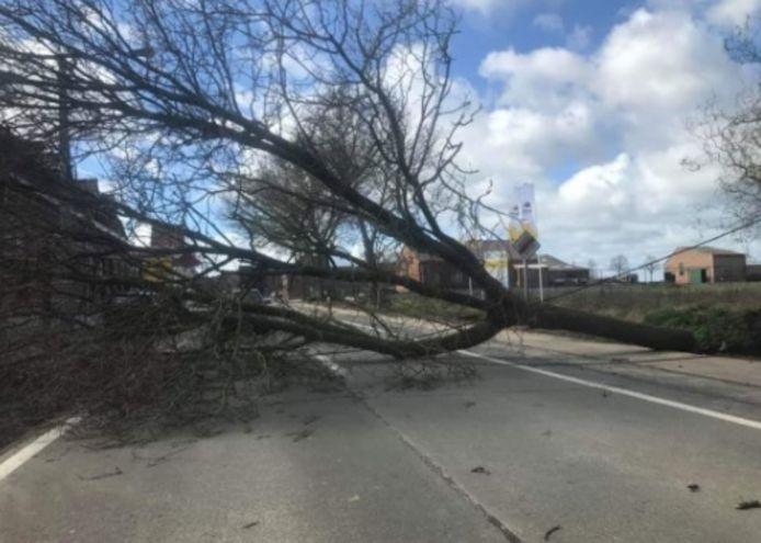 De weg tussen De Klijte en Dikkebus was versperd door een boom.