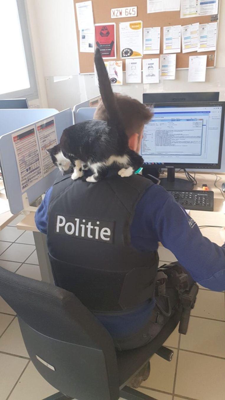 De kat voelde zich meteen thuis bij de politie van Dendermonde.