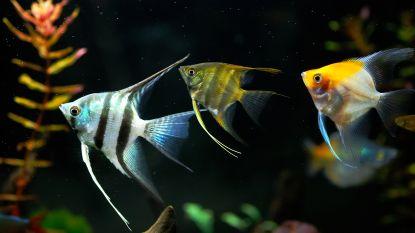 Kantoorvis brengt rust op de werkvloer
