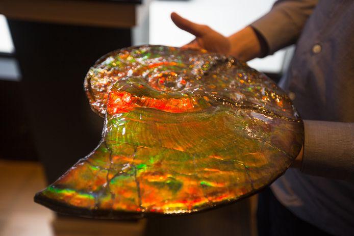 De ammoniet is een fossiel én een edelsteen. De kleuren zijn volledig natuurlijk.