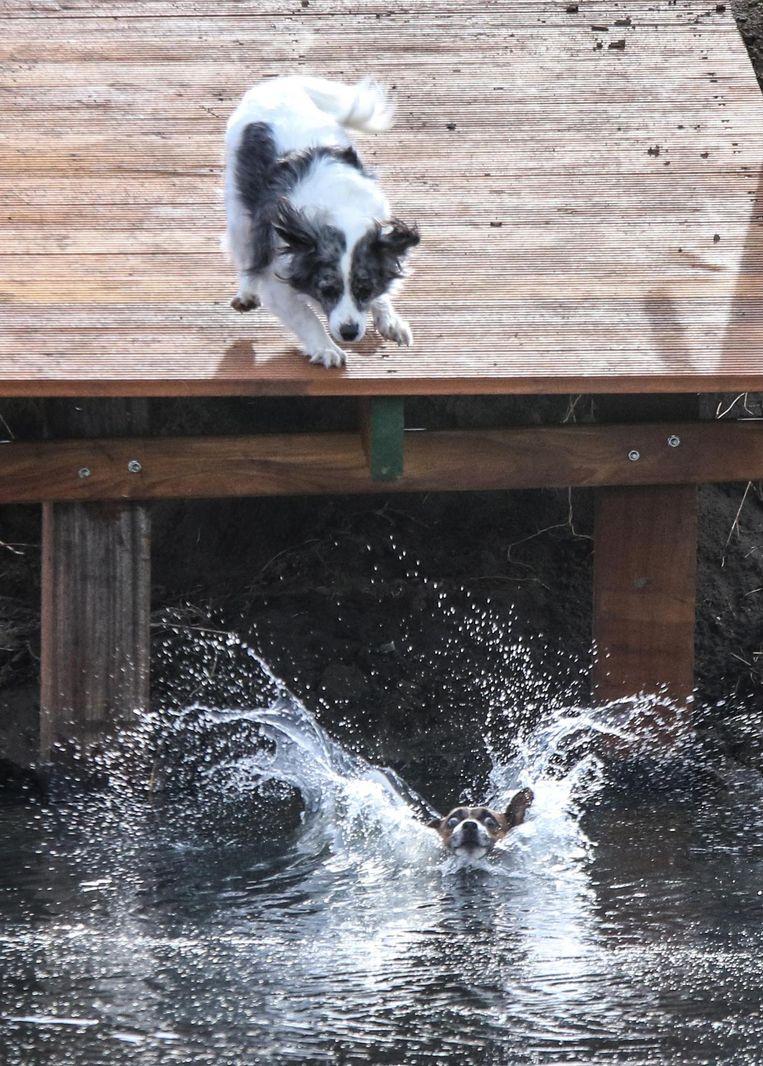 Een hond lijkt toch even te schrikken wanneer hij in het water belandt.