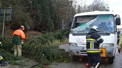 Boom slaat gat in voorruit schoolbus met zestien leerlingen