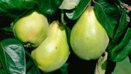 Infosessie over teelt van oude fruitsoorten