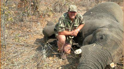 Jachttrofeeën van olifanten importeren uit Zambia of Zimbabwe was verboden in de VS. Trump draait dat nu terug