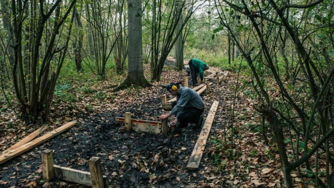 Met droge voeten door het Niels Broek: Natuurpunt legt vlonderpad aan