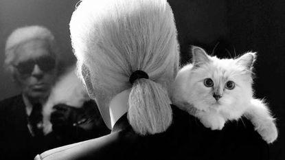 Kat Karl Lagerfeld lanceert kledinglijn