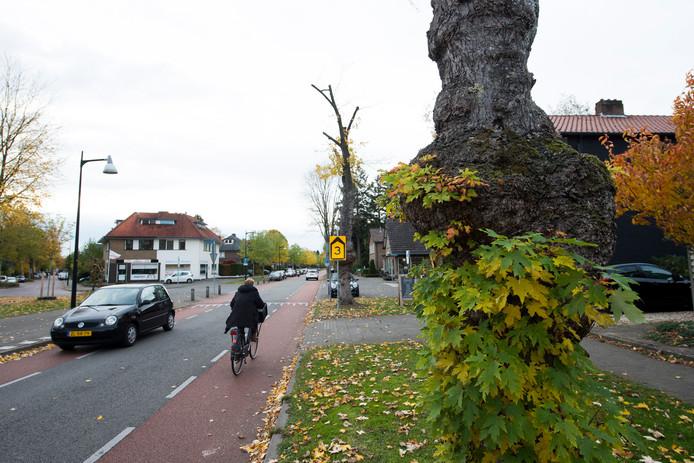 Onder meer aan de Asselsestraat wordt deze winter een aantal bomen gekapt.