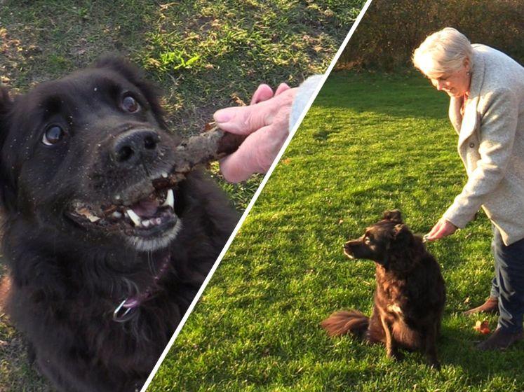 Nina is oppasoma van leenhond Galí: 'Honden nemen altijd vrolijkheid mee'