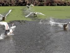 'Stop met jacht op watervogels'