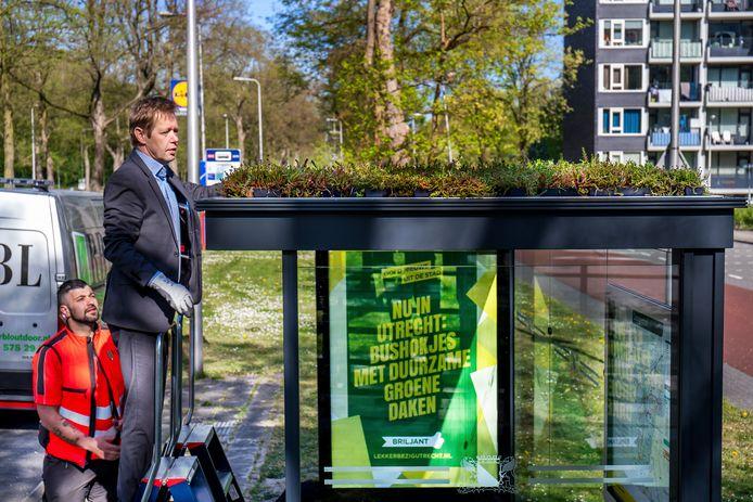 De Utrechtse wethouder Kees Diepeveen voorzag dit voorjaar het eerste van ruim driehonderd bushokjes in Utrecht van een groen dak van sedum. Apeldoorn wil dit voorbeeld volgen.