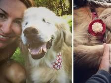 Afscheid van beroemde blinde therapiehond Smiley