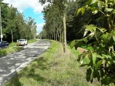 Essentaksterfte slaat toe in Moergestel: 162 bomen om langs de Akkerweg