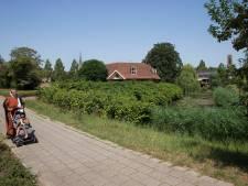Zorg om woekerende duizendknoop in Doesburg: 'Alleen bestrijding bij overlast'