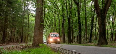Zundert strijdt voor elke boom langs Rucphenseweg