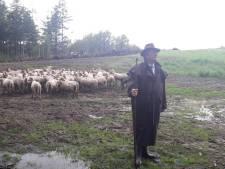 Als makke schapen over de faunapassage in Goirle