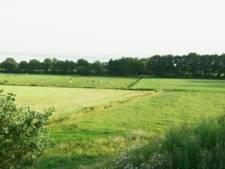Nog steeds koeien in  plaats van het beloofde fietspad tussen Berlicum en Den Dungen