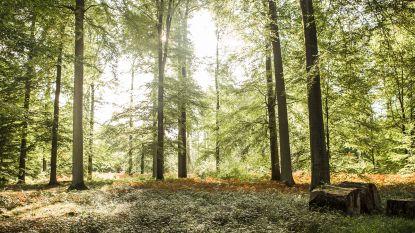Opgroeien met veel groen zorgt later voor minder ademhalingsproblemen