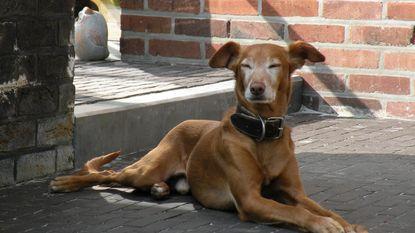 Kansloze hondjes krijgen tweede kans