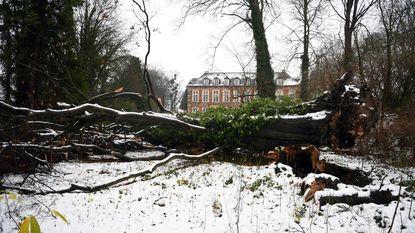 200 jaar oude boom sneuvelt in Abdijpark