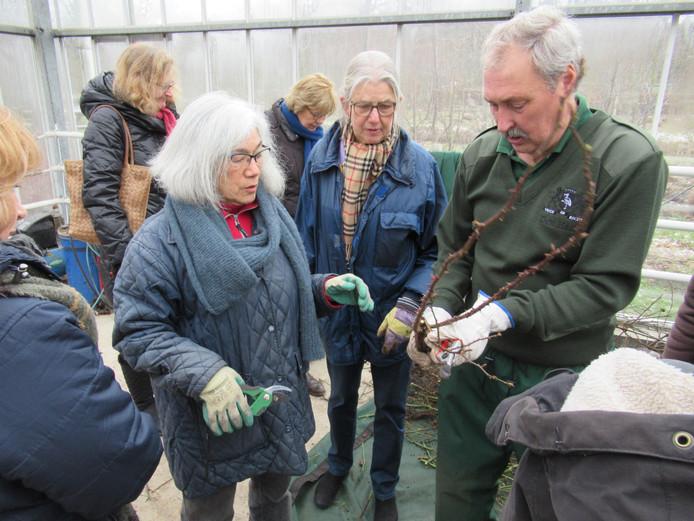 Professioneel rozensnoeier Ed Vreeken van Rosarium van het Westbroekpark houdt een demonstratie.
