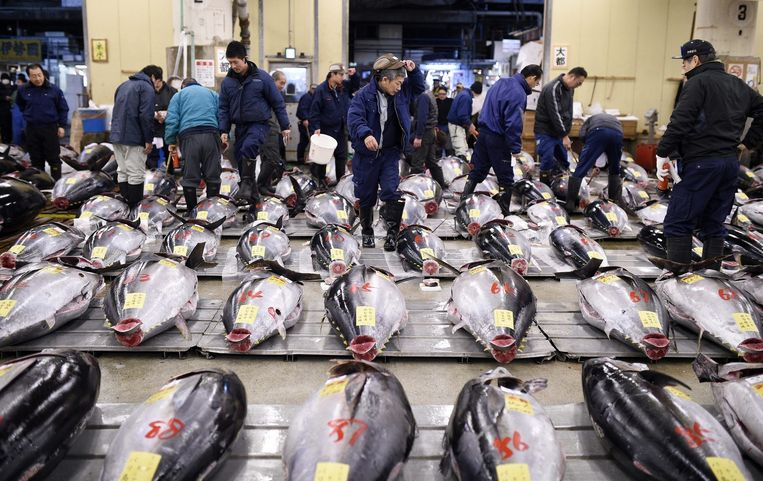Tonijn op een vismarkt in Tokyo. Beeld null